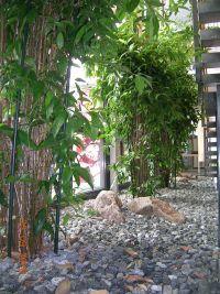 Raumbegrünung in einem Eingangsbereich. Hydrokultur Pflanzen Solitär. Innenraumbegrünung mit Hydrokulturen von grüneräume Raumbegrünung Stoll Stuttgart Heilbronn Pforzheim