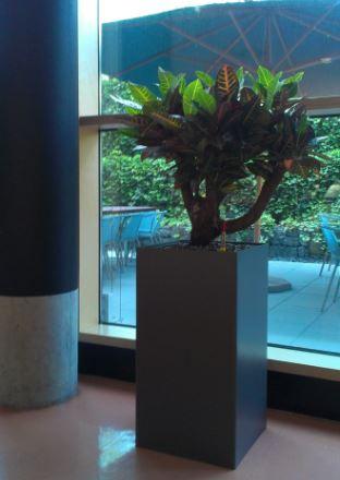 Kantine in stuttgart mit hydrokulturpflanzen in prestige for Bonsai hydrokultur