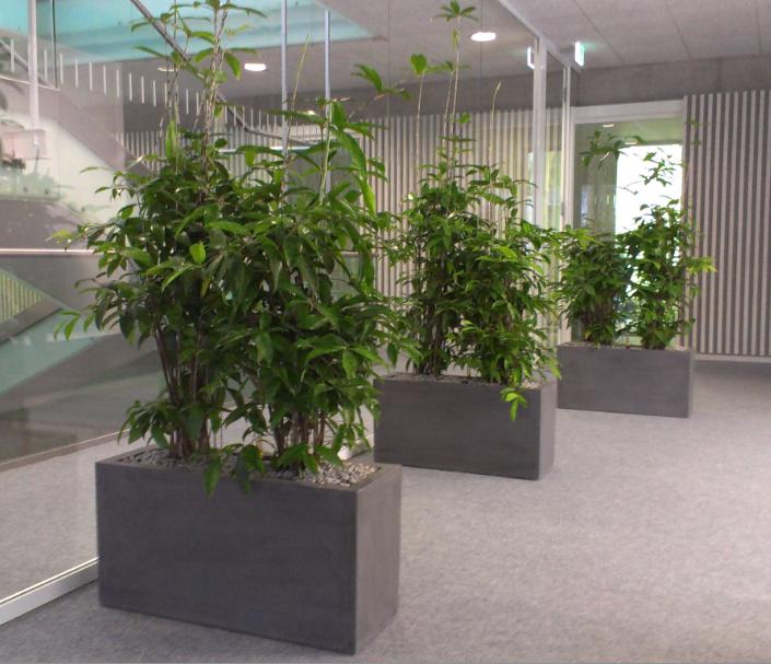 Pflanzen sichtschutz buro wohndesign und m bel ideen for Wohndesign karlsruhe