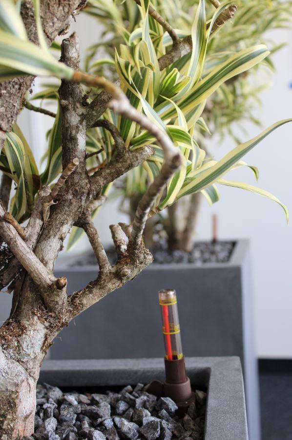hydrokultur pflanzen f r die b robegr nung in karlsruhe. Black Bedroom Furniture Sets. Home Design Ideas