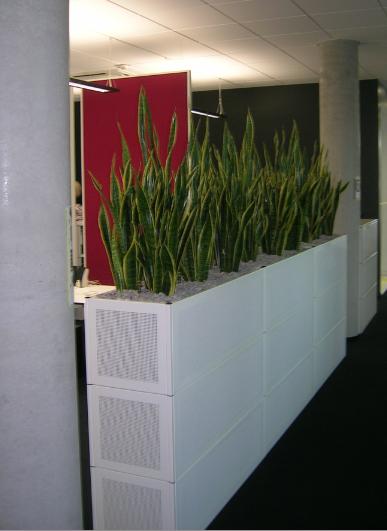 Büromöbel mit Hydrokulturpflanzen