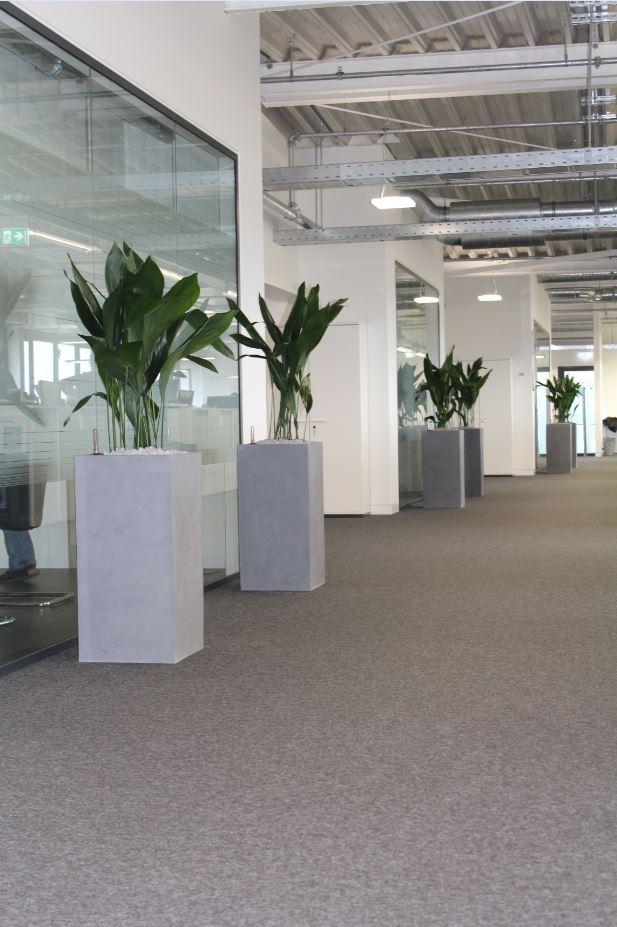 Aspedistra elatior hydrokulkturpflanzen in fiberstone for Hydrokultur design