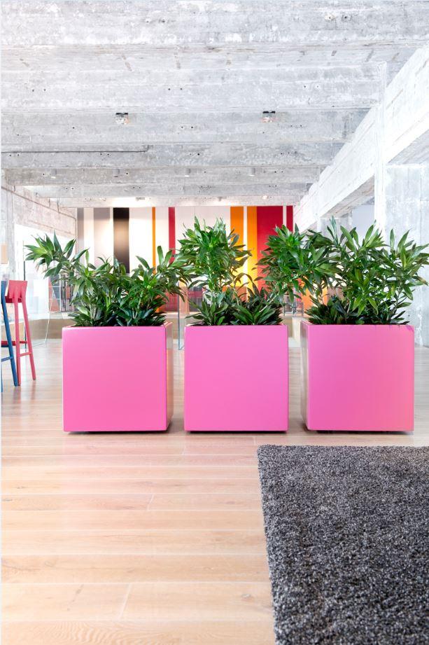 raumteiler mit hydrokultur pflanzen und k nstlichen pflanzen raumbegr nung und b robegr nung. Black Bedroom Furniture Sets. Home Design Ideas