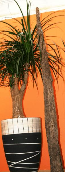 elefantenfu in afrikakeramik galerie gr ner ume raumbegr nung pflanzenpflege gr npflanzen. Black Bedroom Furniture Sets. Home Design Ideas